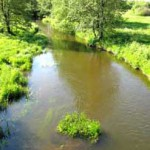 река Птичь