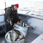 Ловля палтуса в Норвегии