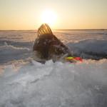 Взгляд на ловлю окуня… из-подо льда