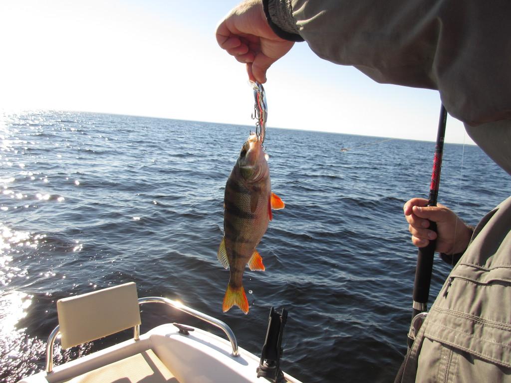 это COTTON CORDELL RIPPLIN RED FINN, или, как её окрестили рыбаки, «фасоль».