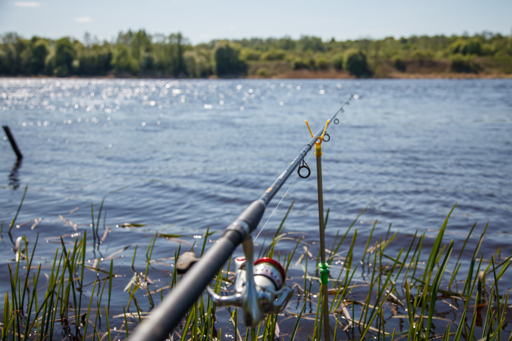 рыбалка на Волхове