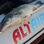 Лодки «Альтаир» – хороший выбор для рыбака