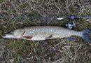 На водоёмах Северо-Запада вводятся ограничения на рыбную ловлю